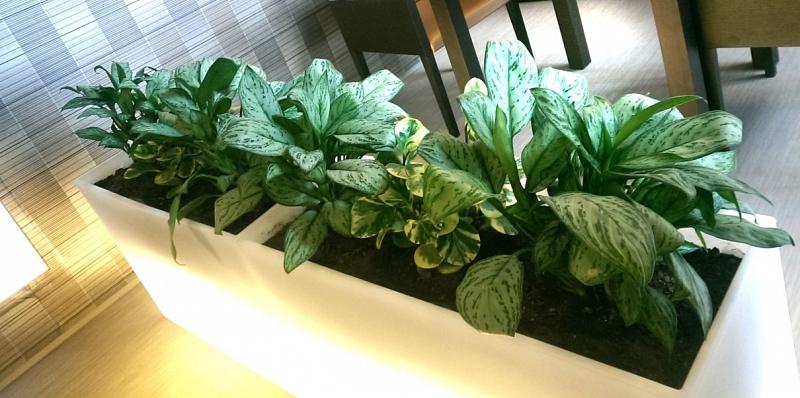 Gardenline plant m armonie plante de interior for Plante de interior